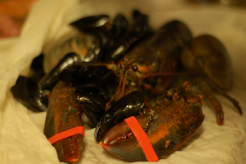 lobster and mussels