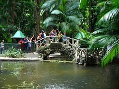 Peixe-boi da Amazônia: Cantor vegetariano (Mara Hermes) Tags: brasil botânico bosque jardim pará belém amazônia peixeboi marahermes