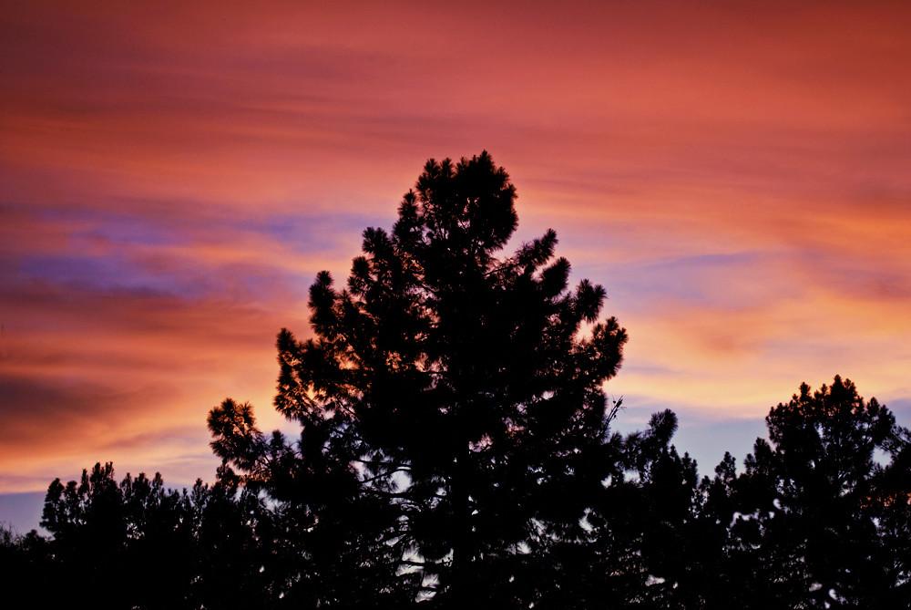 Tree Sky 2