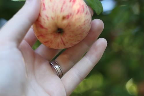 170/365 08/17/2011 Ring