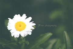 (Fim  Senior 2012 !) Tags: white flower green   yelleow    macroflowerlovers