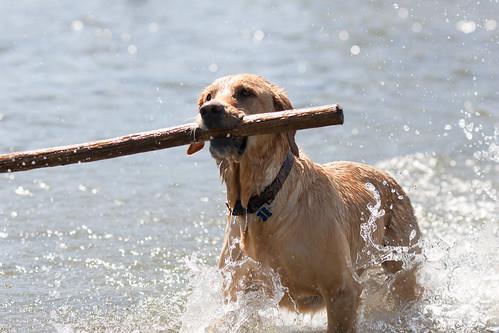 Montana_Trip_2011-08-12_15_27_58_Jeffers_mmg_1487_Tubing_Dogs