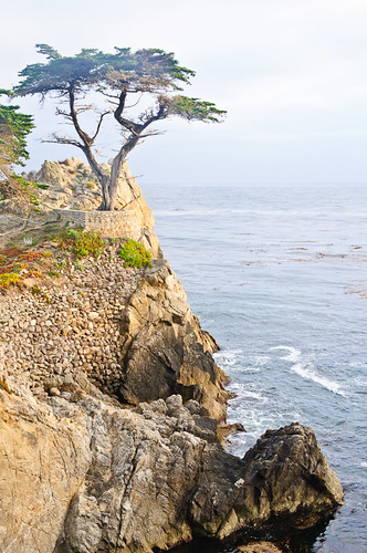 1106-SF&Monterey-3505