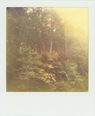 201106 83 Raggaschlucht 2 (sycamoretrees) Tags: film nature water analog river polaroid sx70 outdoor krnten carinthia 600 integral ravine narrow ff impossible instantfilm raggaschlucht sx70alpha firstflush colorshade integralfilm px680