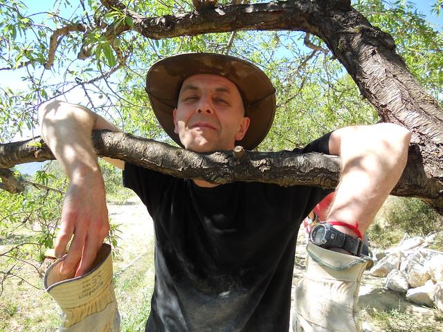 Guhyaloka people   almond tree hanging