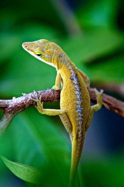 230/365: Lizard Gymnastics