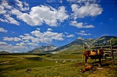 Rigopiano (simone savo  www.simonesavo.com) Tags: light sky horses cloud canon painting eos nuvole simone cross mark ii cielo 5d gran process cavalli abruzzo monti pianura sasso savo