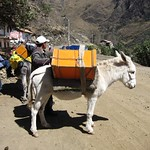"Mules/Donkeys(?) Ready to Go <a style=""margin-left:10px; font-size:0.8em;"" href=""http://www.flickr.com/photos/14315427@N00/6079886972/"" target=""_blank"">@flickr</a>"