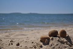 DSC_1125 (Mo ses) Tags: sardegna mar italia playa paisaje esponja cerdea torregrande