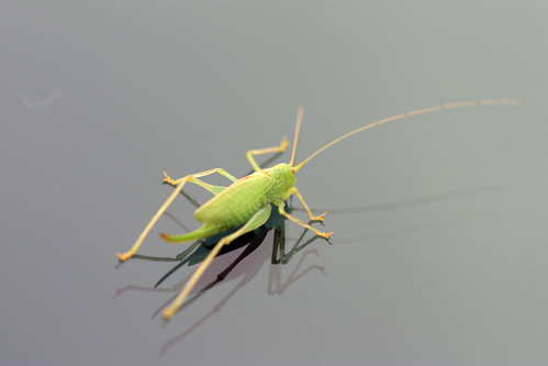 Grasshopper by kayaker1204