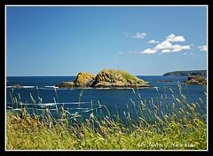 The Cape (Nancy Hawkins) Tags: ocean blue seascape green nature grass newfoundland rocks atlantic