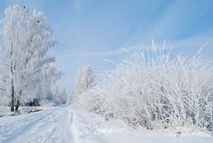 1 (Bargais) Tags: blue winter white nature birds landscape latvia latvija kuldiga kuldīga