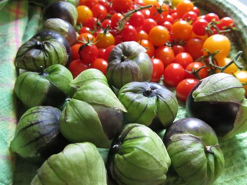 Pre-hurricane Harvest