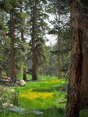 IMG_4933web (rowjimmy76) Tags: california trees summer usa west canon landscape scenery unitedstates state scenic cal geography wilderness fullerton csuf g11 geog sierranevadamountains easternsierra 483 inyonationalforest goldentroutwilderness
