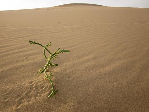 Desierto del Gobi 89