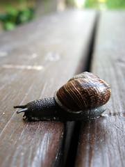 Snail (kauppvi) Tags: snail olympus uz sp550