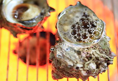 Sazae being grilled (horned turban shell) (Spice  Trying to Catch Up!) Tags: food art cooking japan canon geotagged photography eos photo asia flickr colours image picture shell livejournal heat seafood 5d grilled       turboshell   mark   ihheater   ih