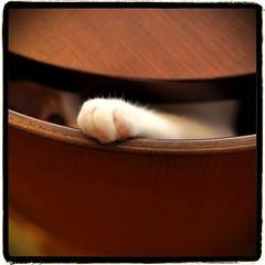 #cat ベッドの隙間、下から殴られることもあります。