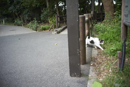 at Ueno