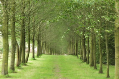 Tree lined (jillyspoon) Tags: trees tree texture grass leaves canon landscape eos scotland pattern view path walk grow walkway avenue canoneos dumfriesgalloway dumfriesandgalloway machars wigtownshire canon60d southwestscotland