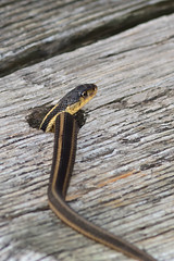 Snake in a hole DSC_9204 by Mully410 * Images