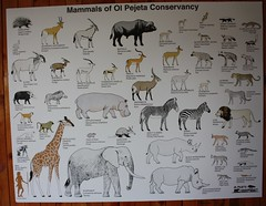 Mammals of Ol Pejeta Conservancy (Sum_of_Marc) Tags: africa ol kenya centre rhino information kenia sanctuary afrique conservancy morani pejeta  olpejeta  republicofkenya  moraniinformationcentre