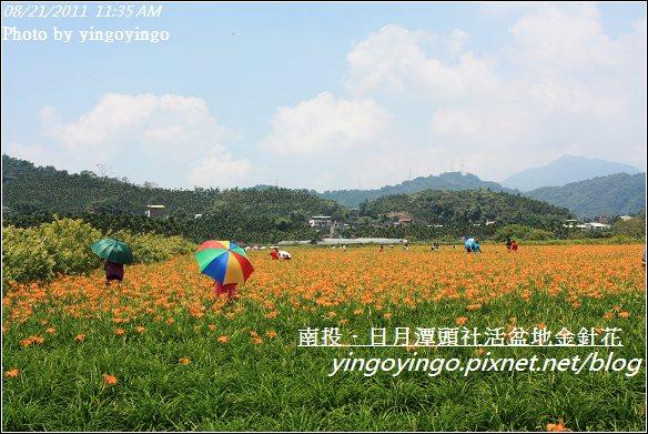 南投魚池_頭社活盆地金針花20110821_I1314