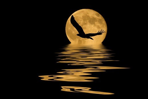night flying women reflection An ojibway narrative with the art of a practiced storyteller, ignatia broker recounts the life of her great-great-grandmother, night flying woman, who was born in the.