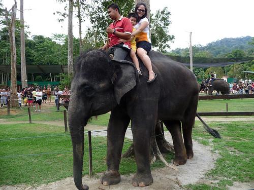 Kuala Gandah Elephant Sanctuary - elephant ride