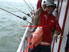201003010 (fymac@live.com) Tags: mackerel fishing redsnapper shimano pancing angling daiwa tenggiri sarawaktourism sarawakfishing malaysiafishing borneotour malaysiaangling jiggingmaster