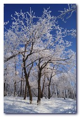 (Tatters:)) Tags: trees winter snow forest oak frost russia hoarfrost explore myfavourite     colorphotoaward  rimedsnow