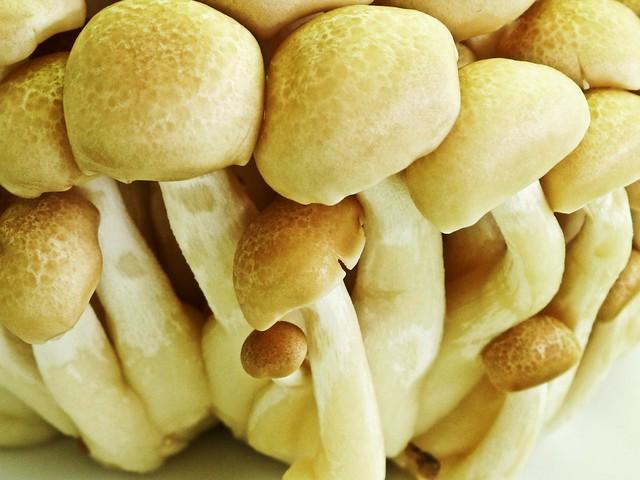 IMG_2032 Bunashimeji mushroom