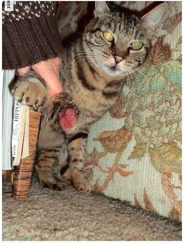 Cat Wound