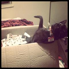Naughty cat Pt. 2