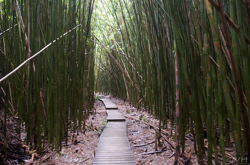 bamboo forest of pipiwai trail