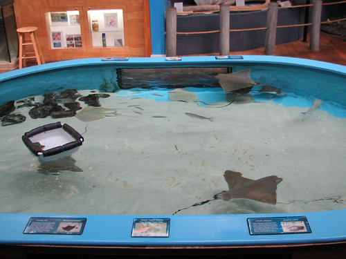 Stingray Touch Pool