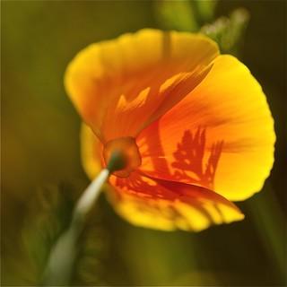 photo macro au carré fleur & nature / les ombres & couleurs d'un soir de d'automne à chamonix