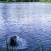 池水の噴出