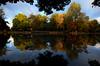 Vernon Park, Basford: first signs of autumn (blinkingidiot) Tags: nottingham autumn swan colours basford vernonpark bulwell nottinghamwildlife
