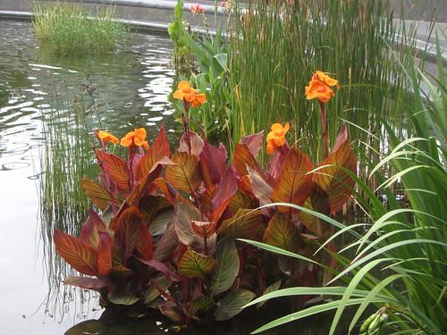 turtle pond flowers