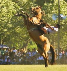 No le aflojs... (Eduardo Amorim) Tags: horses horse southamerica arge