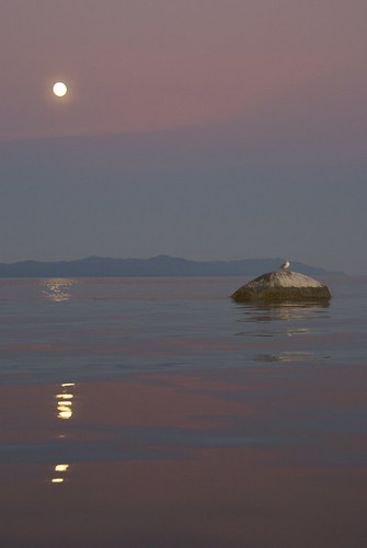 Tiny Moonlit Island
