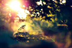 (andrew evans.) Tags: morning trees summer england sun nature forest sunrise kent woods nikon bokeh flare f2 emotional d3 135mm
