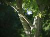 _1080579 (Old Lenses New Camera) Tags: plants garden cine panasonic g1 75mm f19 3inch elgeet cinetel cmount