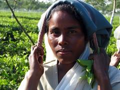 Tea-picking lady taking a break. (Linda DV (away for the WE)) Tags: people woman india canon geotagged tea fields assam 2008 sevensisters teafields 7sisters northeastindia teapicking powershots5is lindadevolder