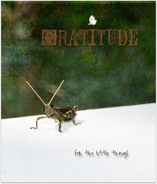 gratitude for the little things 1