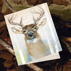 Whitetail Deer (snailspacepaper) Tags: environment buckdeer wildlifecards naturecards recycledcards