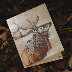 Elk (snailspacepaper) Tags: environment wildlifecards naturecards recycledcards bullelkcard