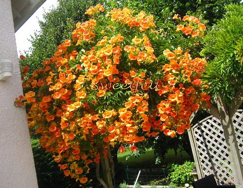 Uma Quinta Flower feliz para nós todos!!! by sweetfelt \ ideias em feltro