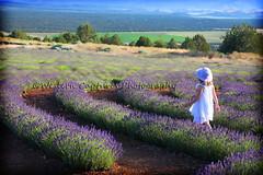 ~ Lost In Thoughts ~ (~ Western Dreamer ~) Tags: nature lavender littlegirl greetingcards summerflowers lavenderfarm westerndreamer mtshastalavenderfarm siskiyoucountyflowers northerncalifornialavenderfarms westerncapturescom westerncapturesphotography mygearandme mountshastalavenderfarm photocontesttnc11 californiatnc11
